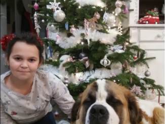 Uczennica z klasy 4c ze swoim psem na tle choinki